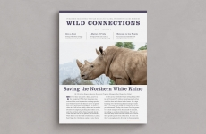 Design: Wild Connections Newsletter Redesign