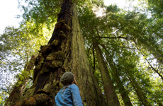 Travel Photography: Nor Cal & Redwoods National Forest