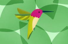 Illustration: Beach Birds